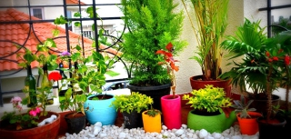 Growing beautiful plants indoors