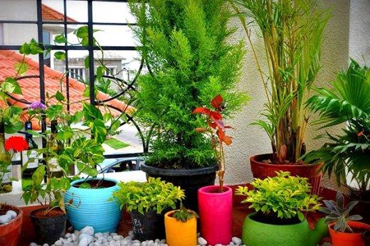 Growing beautiful plants indoors