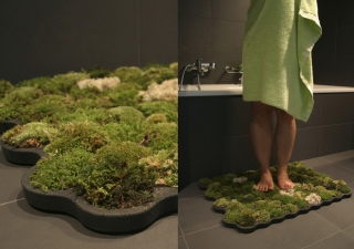 Living moss carpet for your bathroom